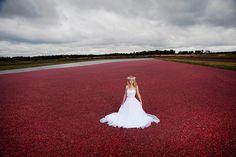 Bride in a cranberry bog