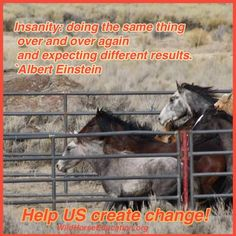 At Wild Horse Education (WHE) our inbox receives all kinds of questions about wild horses. We can count on getting at least a hand full of requests every week to read a freeze mark or people asking…