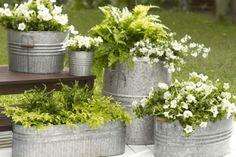 floreira galvanizada samambaias