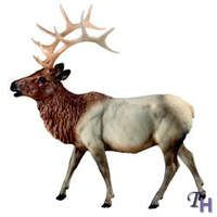 Ask.com Elk Images, Breyer Horses, Moose Art, Models, Animals, Templates, Animales, Animaux, Animal