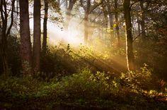 STOCK: Misty Forest light 8 by ~needanewname on deviantART
