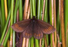 Butterfly Conservation is a British charity devoted to saving butterflies, moths and their habitats throughout the UK. Lake District, Natural World, Habitats, Moth, Butterflies, Insects, Creatures, Mountain, Painting