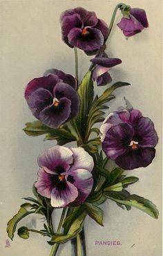 THE TIME OF FLOWERS, SERIES I....postcard, 1910