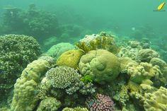 reef-cairns