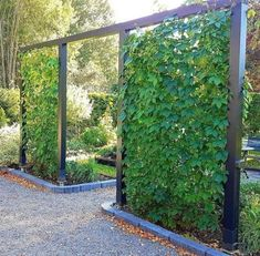 The post Virginia creeper! appeared first on Terrasse ideen. The post Virginia creeper! appeared first on Terrasse ideen. Front Yard Landscaping, Backyard Patio, Landscaping Ideas For Backyard, Landscaping Edging, Privacy Landscaping, Country Landscaping, Back Gardens, Outdoor Gardens, Virginia Creeper