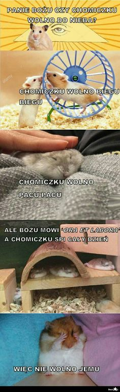 Wtf Funny, Funny Memes, Jokes, Animals And Pets, Funny Animals, Cute Animals, Ora Et Labora, Laugh Or Die, Polish Memes