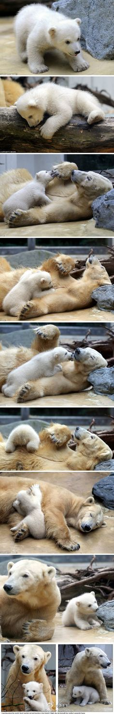 Anori, polar bear cub in Wuppertal Zoo