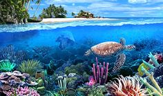 Gardens of Time | Great Barrier Reef