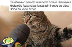 A internet só leu verdades na entrevista do gato. | As pessoas criaram legendas para a foto de um gato dando entrevista