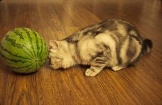 watermelon?????   HMMM what to do, what to do??????