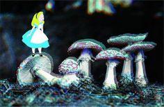 Alice in Wonderland Trippy Shrooms