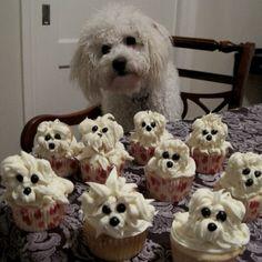pupcakes hoho <3