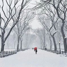 Snowy day @ Central Park, NY - color perspective