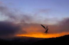 Seagull by Lidia, Leszek Derda on 500px