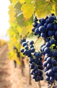 E per gli amanti del vino noi consigliamo un simbolo del Molise: una bottiglia di Tintilia, prodotto autoctono per eccellenza e fiore all'occhiello della terra molisana.