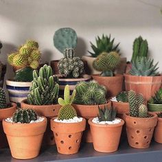 Who loves a cactus there? Easy plant to take care love Deco Cactus, Cactus Decor, Plant Decor, Cacti And Succulents, Planting Succulents, Planting Flowers, Baby Cactus, Cactus Flower, Cactus Care