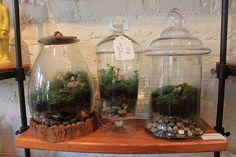 Apothecary Moss Terrarium