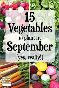 radish, lettuce, cauliflower, cabbage, beets, carrots Vegetable Planting Calendar, Garden Plants Vegetable, Planting Vegetables, Growing Vegetables, Regrow Vegetables, Perennial Vegetables, Fall Vegetables, Growing Lettuce, Gardens