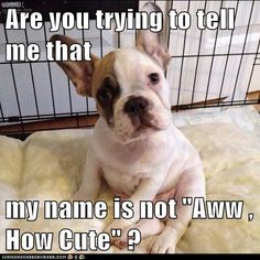 """Are you trying to tell me that  my name is not """"Aww , How Cute"""" ?"""