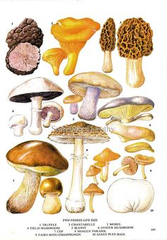 Edible Mushrooms Wild Vegetable Food Chart by SurrenderDorothy