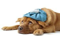Sick as a dog!