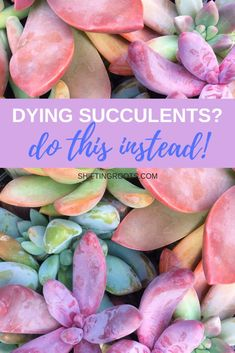 Urban Garden Are your succulents constantly dying indoors in containers or terrariums? Here's how to care for them instead, plus some tips for propagating tired looking succulents into beautiful decor, or as filler for your garden next spring. Growing Succulents, Cacti And Succulents, Growing Plants, Planting Succulents, Planting Flowers, Propagating Succulents, Succulents In Containers, Succulent Gardening, Succulent Care