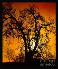 Fine Art Photography - Silhouette photography by Bedros Awak - Shadowlands 11, beautiful color contrast of oranges and black. Nicely done Bedros.