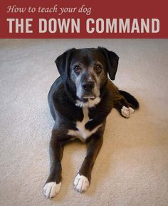 Want an easy way to control begging, jumping on guests and an overly-excited dog? #dogs #dogtraining