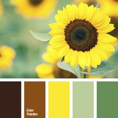 almost black color, color matching for house, color of leaves, color of sunflower, color of sunflowers, dark-orange color, dirty brown color, green color