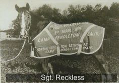 Reckless was a horse used in the Korean War-a true hero in every sense of the word