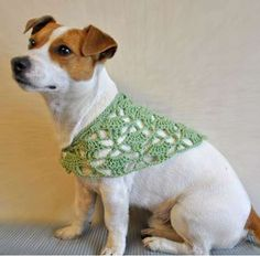 Crocheted Canine Collars - The Amailo Dog Accessories are Pawsitively Precious Knits (GALLERY)