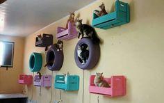 Diversão pros felinos ♡