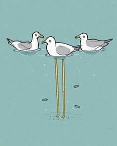 Seagulls by randyotter, via Flickr