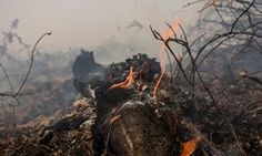 Palm oil giant's impact in Indonesia worse than reported, says Greenpeace The NGO accuses Malaysian palm oil company IOI of failing to act in accordance with its own sustainability policies and Indonesian law Malaysian palm oil giant IOI drops lawsuit against green group. #corporatedeforestation