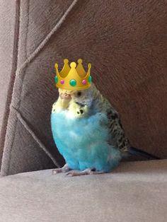 hezarfen bird
