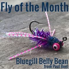 Fly of the Month - Bluegill Belly Bean | J Stockard