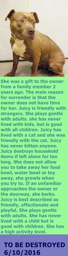 MURDERED 6/10/2016 --- Manhattan Center  My name is JUICY. My Animal ID # is A1075949. I am a female gray and white am pit bull ter mix. The shelter thinks I am about 2 YEARS  I came in the shelter as a OWNER SUR on 06/01/2016 from NY 10458, owner surrender reason stated was NO TIME. http://nycdogs.urgentpodr.org/2016/06/juicy-a1075949/