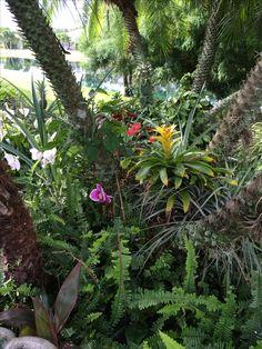 Back Yard Orchid Gardening in SW Florida Orchids Garden, Florida, Real Estate, Backyard, Gardening, Plants, The Florida, Real Estates, Yard
