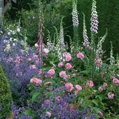 Rose Garden Gertrude Jekyll - Bare Root Roses - this is a David Austin rose. foxgloves and catmint seem to be lovely companion plants! Rose Garden Design, Pink Garden, Dream Garden, Small Cottage Garden Ideas, Garden Cottage, Garden Shrubs, Garden Landscaping, Fence Garden, Rosas David Austin