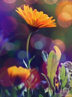 Miss Sunshine by Laura  on 500px