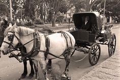 Hacienda Santa Catalina - Arte & Gourmet Eventos Antique Cars, Santa, Horses, Antiques, Animals, Gourmet, Haciendas, Events, Places