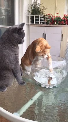 Cute cat funny animal pictures, funny animal videos, gato gif, crazy ca Funny Animal Videos, Cute Funny Animals, Funny Animal Pictures, Cute Baby Animals, Animals And Pets, Funny Cats, Pics Of Cute Animals, Funny Videos, Kittens Cutest