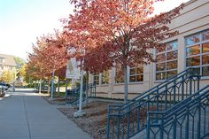 Peterson Wing by Greenwich Library, via Flickr