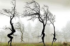 Sometimes the trees walk around up here but this is the first time I've seen them dancing!