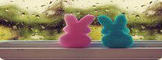 Facebook covers Beautiful bunnies colors cute i love u .jpg 851×315 pixels