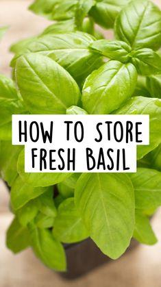 Growing Lemon Trees, Growing Mint, Growing Herbs, Growing Vegetables, Basil Growing, Storing Fresh Basil, Fresh Herbs, Basil Plant, Bloom Where You Are Planted