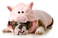 Wir verraten dir 10 Tipps, wie du deinen inneren Schweinehund überwinden und deine sportlichen Ziele erreichen kannst.