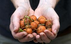 8 Edibles You Can Grow Indoors in the Winter - Page 2 of 2 - Veggie Garden Zone
