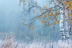 Winter Wonder, Military, Landscape, City, Nature, Birches, Painting, Autumn, Dream Catchers