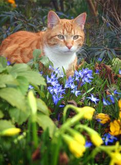 "How to Deter Cats from leaving ""deposits"" in your flowerbeds/mulch:•Scatter fresh orange and lemon peels or spray with citrus-scented fragrances. Coffee grounds, vinegar, pipe tobacco, or oil of lavender, lemongrass, citronella, or eucalyptus also deter cats."